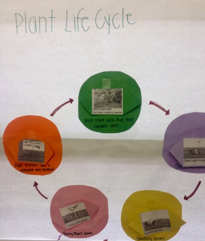 Plant Life Cycle Poster