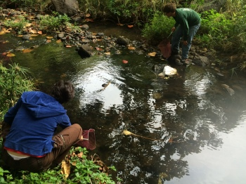 Need fish for the aquaponics system?! We go to the stream to catch fish.