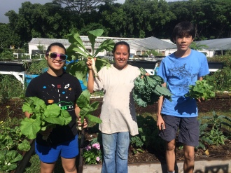 Harvesting (From left to right: Miranda, Lehua, and Nick)