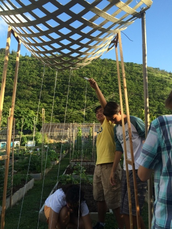 Making a trellis for beans: we have 32 raised beds at our CSA farm. Each group is responsible for the 10 raised beds.