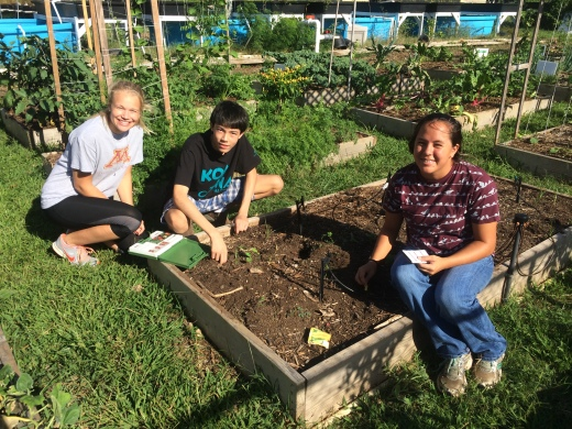 "Testing soil before planting our ""three-sisters"" companion plants garden bed"